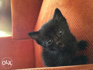 Poklanjam četiri predivna mačića!