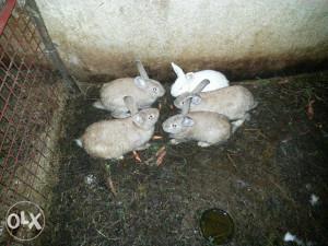 Zečevi i kunići