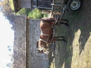 Konj na prodaju