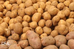 Krompir žuta Agrija neprskani