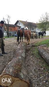 Konji u paru