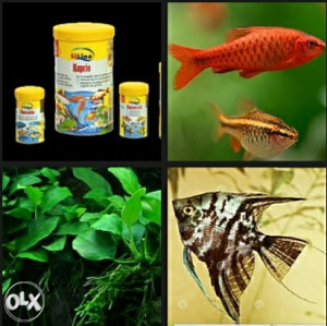 Ribe 4 kom, biljke 4-5 vrsta, preko 30 pelcera, hrana