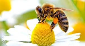 Lijekovi za pčele