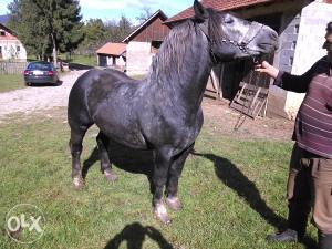 Najbolji konji na Pik-u