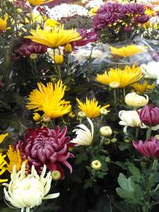 Biljke i cvijeće