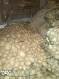 Krompir Agria
