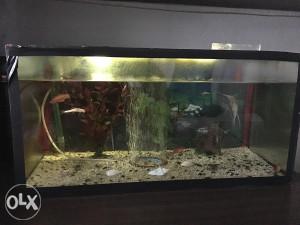 Akvarijum,ribice i oprema