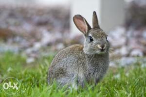 Tražim zečeve i prodajem zečeve