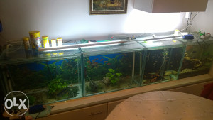akvarijumi rasprodaja