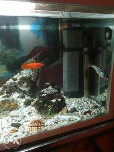 Akvarijum sa ribama