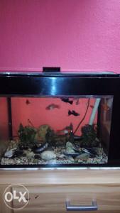 Akvarijum sa ribama 70 L